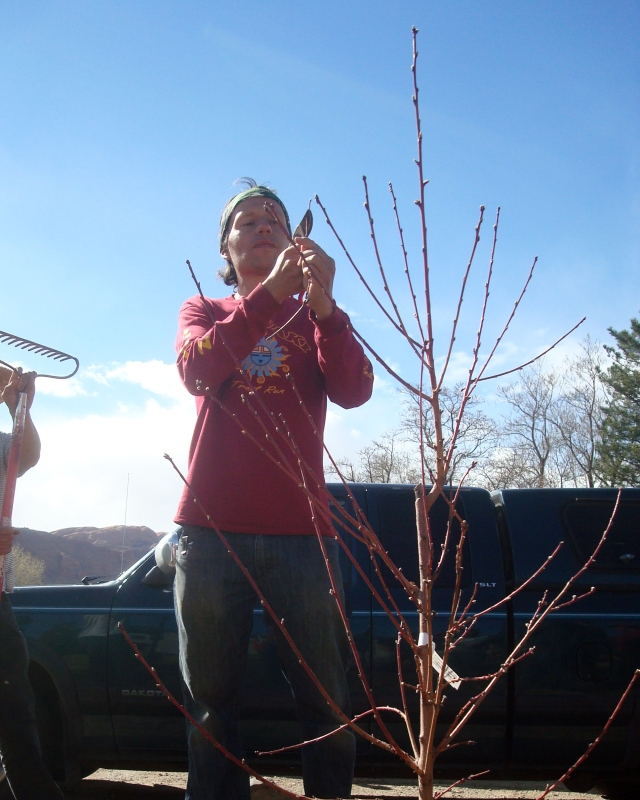 Fruit tree and bee enthusiast Jacobo teaches us about pruning. So much of what we did that day was about working on a micro level while thinking on a macro level.