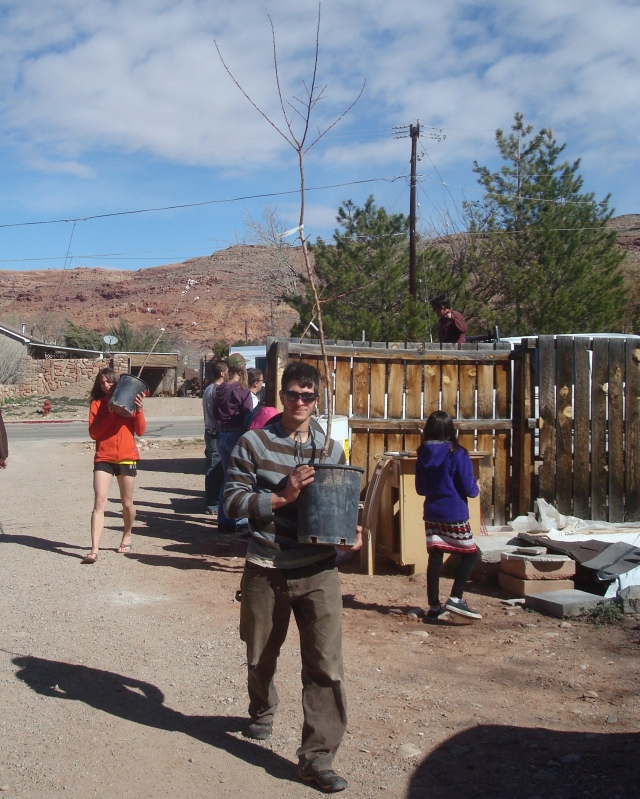 Here current CR intern Josh Raff carries a native tree from Kara's truck. Kara Dohrenwend owns a local native plant nursery called Wildland Scapes (www.revegmoab.com) and partner organization Rim to Rim Restoration (revegetation.org).