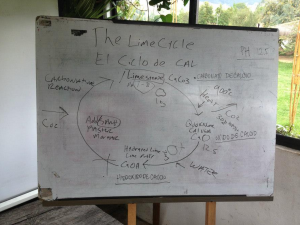 The Lime Cycle is the process of turning limestone into